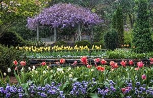 Sarah P. Duke Gardens on the Duke University Campus
