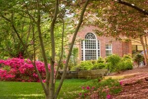Azaleas and Crepe Myrtles can be found along every sidewalk on campus
