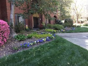 Audrey's garden beautifully continues into her neighbor's yard