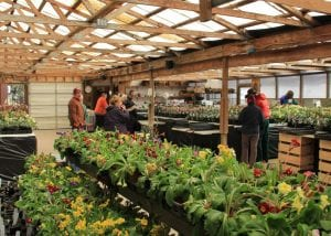 The Hellebore Festival at Pine Knot Farms