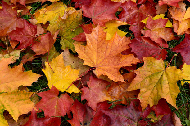 Things to Do in the Triangle This Fall
