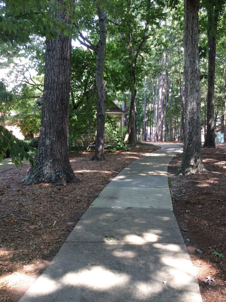 A tree-covered path through the campus